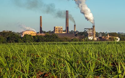 How Pollution Affects Our Food Crops